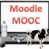 Moodle Experience